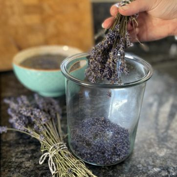 Dried lavender spikes